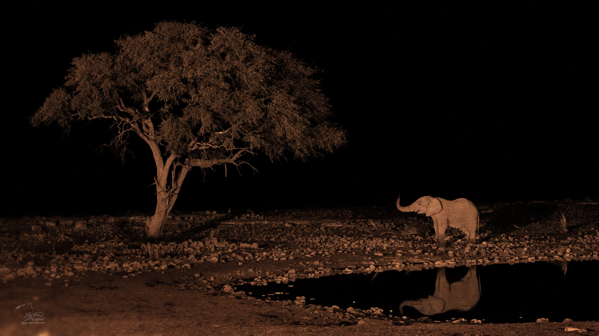 Waterhole at night in Etosha NP.Namibia